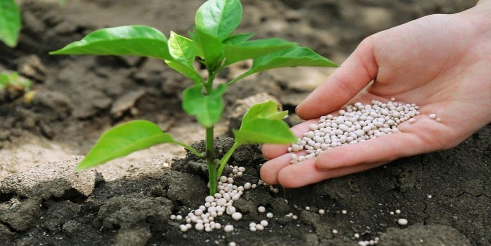 Qué Hay Que Tener En Cuenta Para Escoger Un Buen Abono Para Plantas